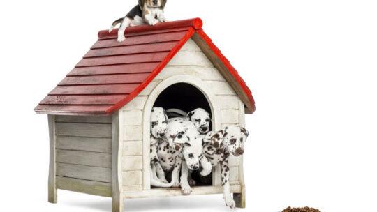 Croquettes naturelles pour chien : Comment ça marche ?