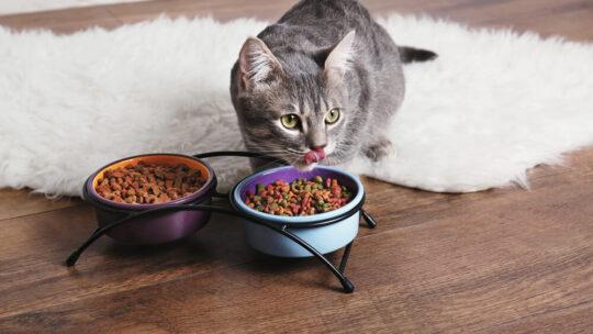 Croquettes naturelles pour chat, nos préjugés