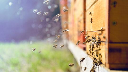 Traceur GPS ruche: Comment éviter les vols